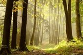 Fotografie Herbstwald auf dem Gipfel des Berges