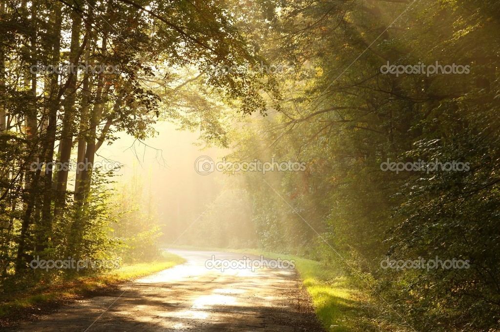 Rising sun illuminates the autumnal leaves of trees and falls to the forest road.
