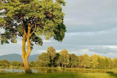 Spring tree at dawn