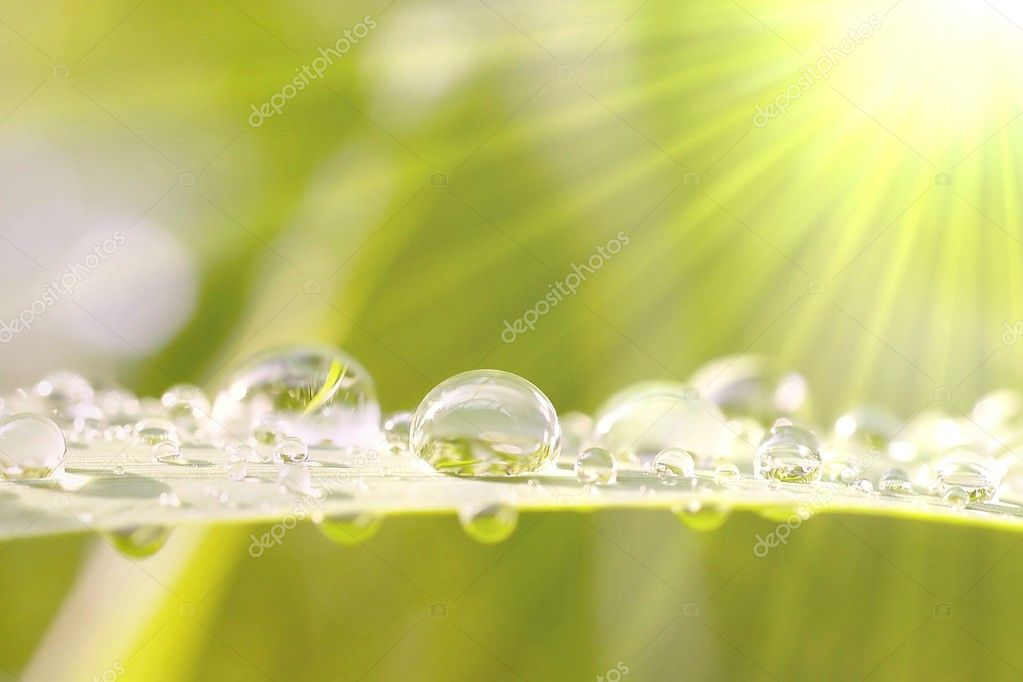 Morning dew on a grass