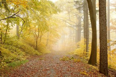Picturesque forest path
