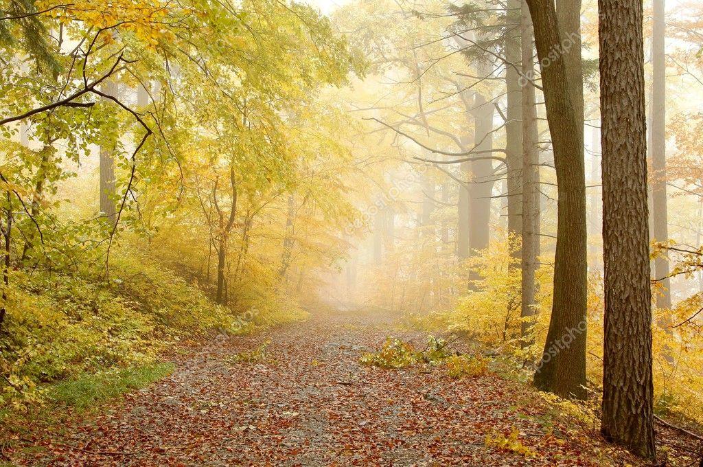 Фотообои Живописный лесной тропинке