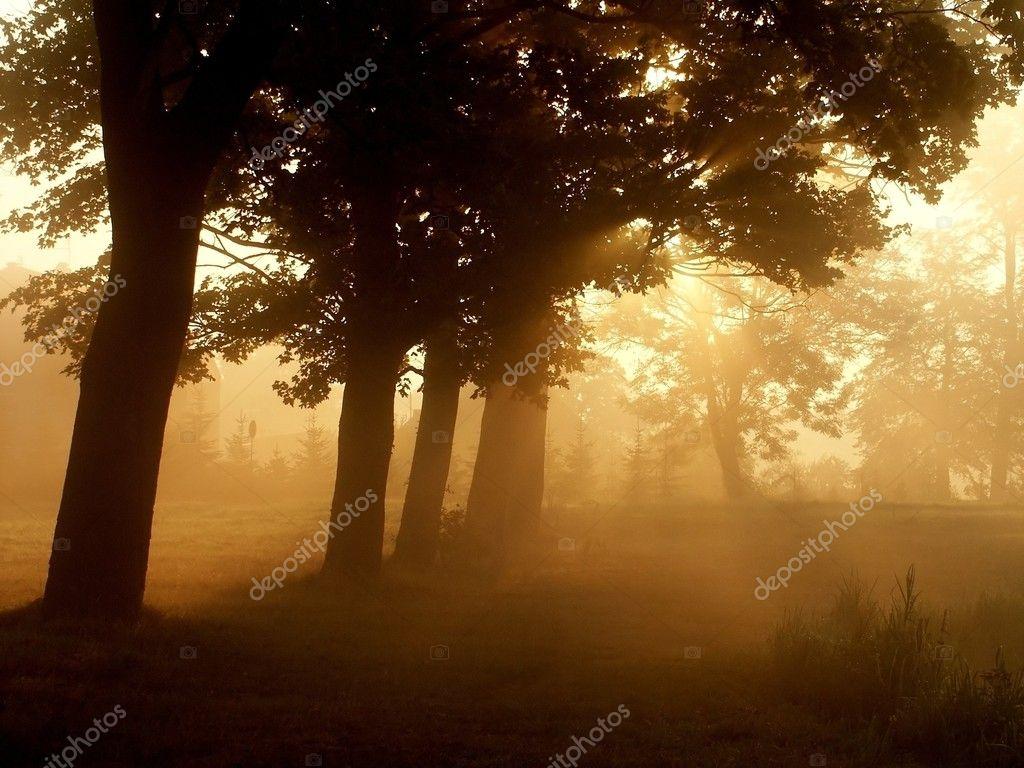 Maple trees at sunrise