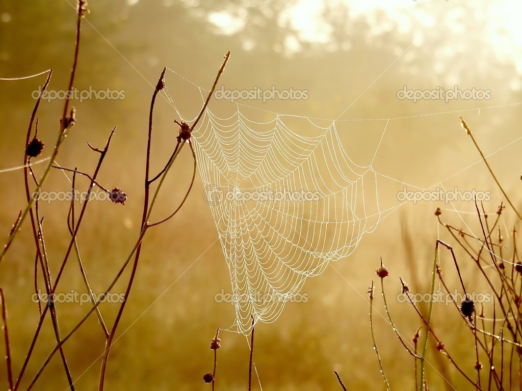 Spider web at dawn