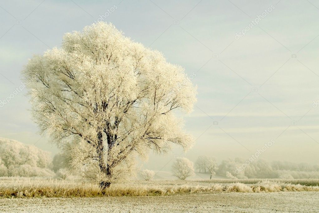 Picturesque winter scenery