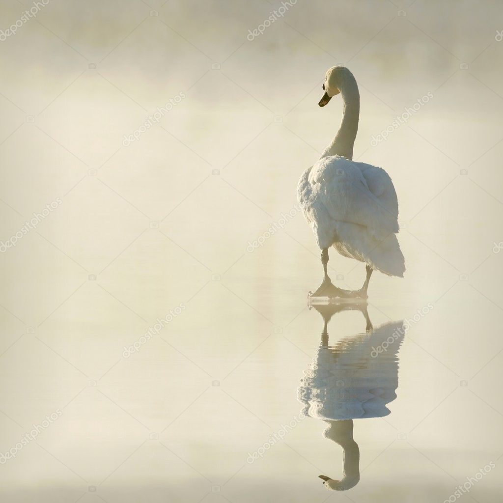 Swan on frozen lake