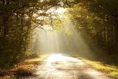 Fotografie cesta lesem podzimní při východu slunce