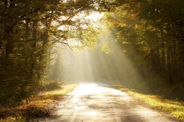 Road through autumn forest at sunrise
