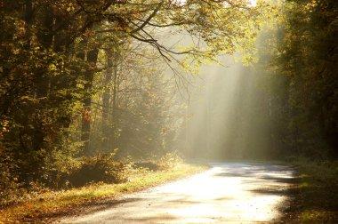 Misty road through autumn forest
