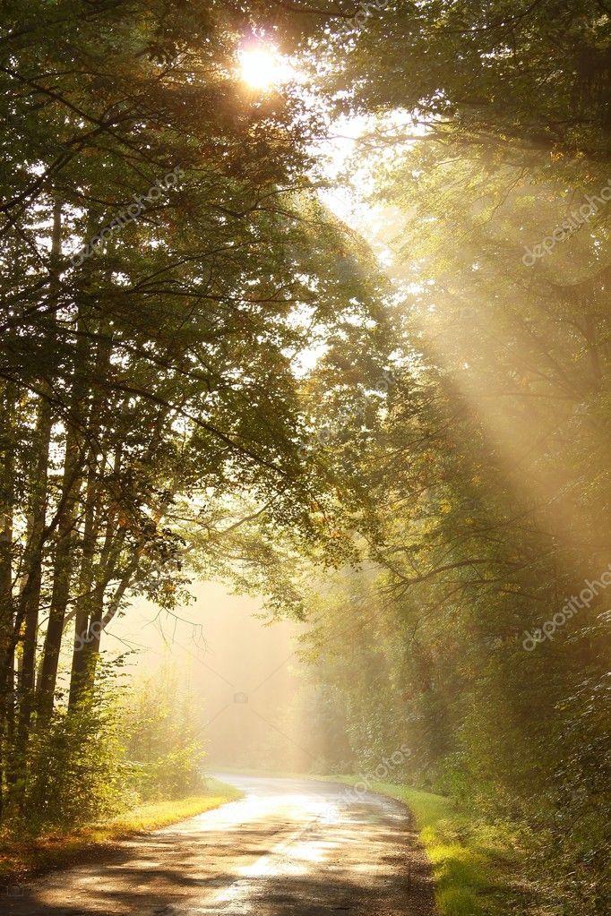 Фотообои Misty autumn forest road at sunrise