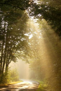 Sunbeams falls into the misty woods