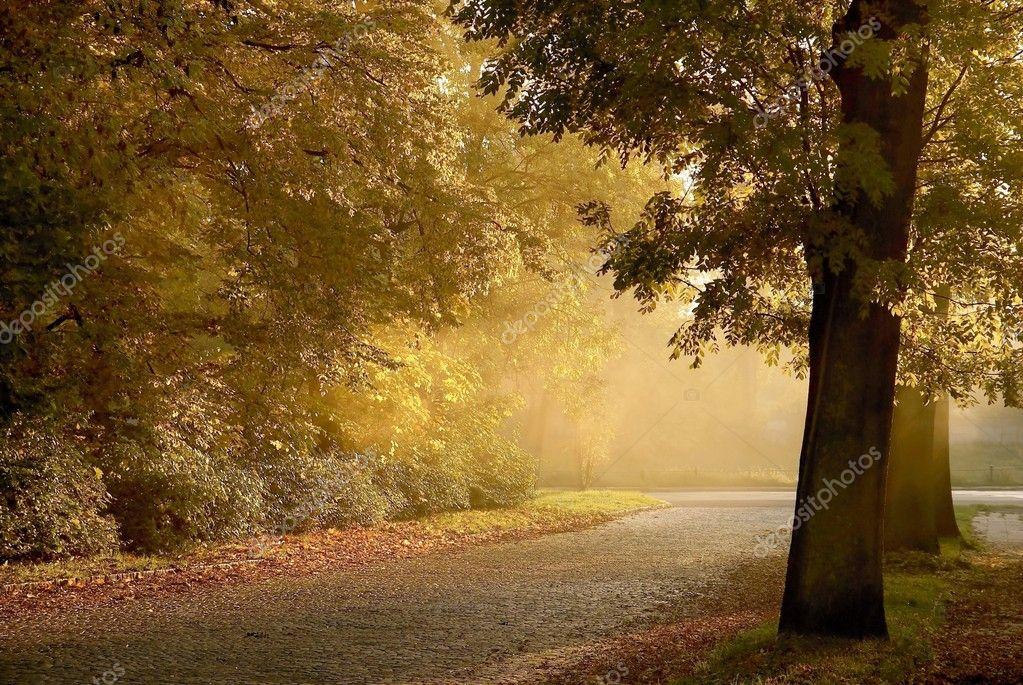 Rural road at dusk