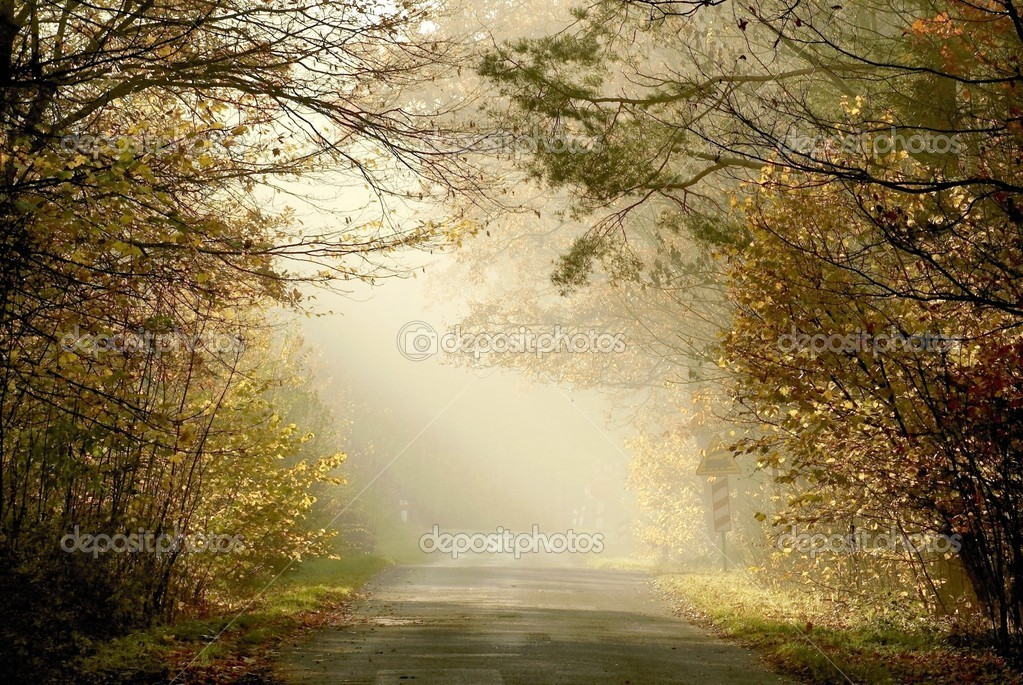 Country road through the misty woods
