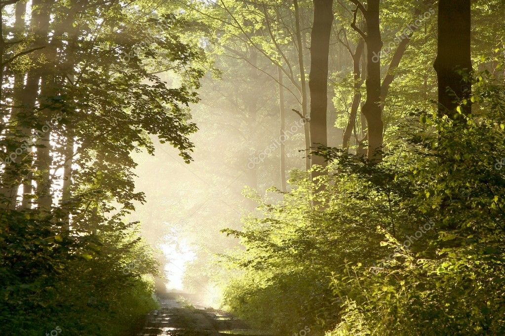 Фотообои Path through misty spring forest at dawn