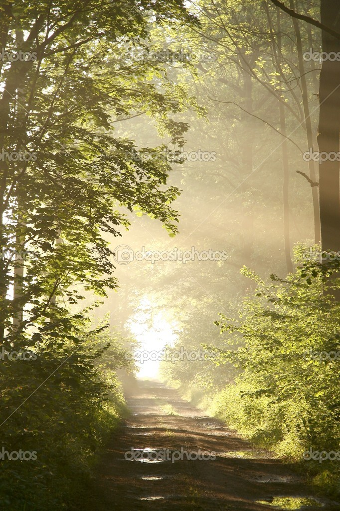 Path through misty spring forest at dawn