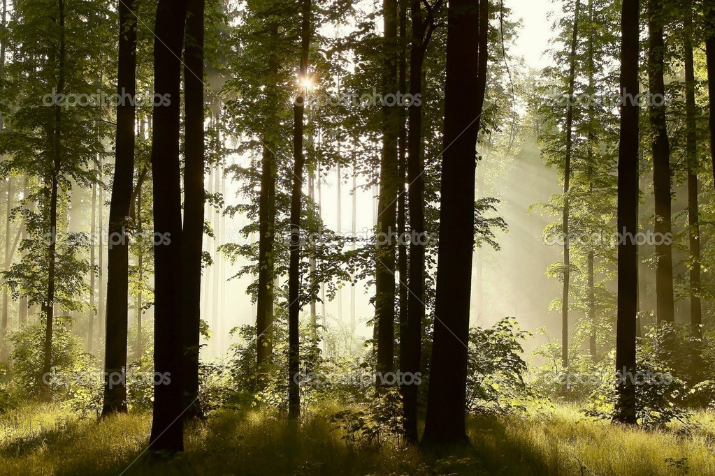 Sunlight falls into a misty forest