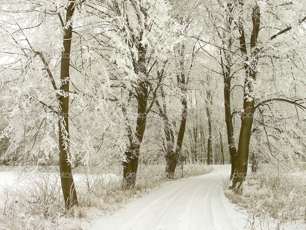 Rural road through winter forest