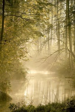 River in misty autumn forest