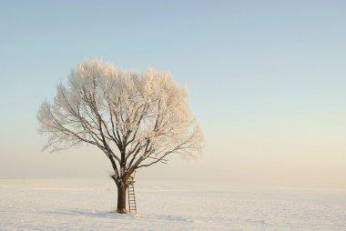 Winter tree at dawn