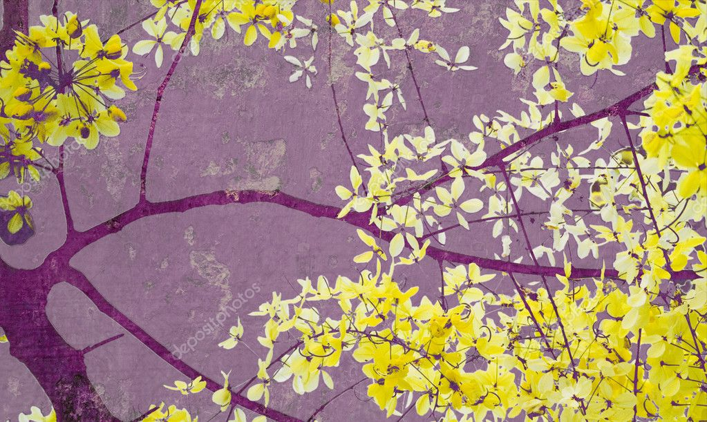 Golden shower tree on purple wall