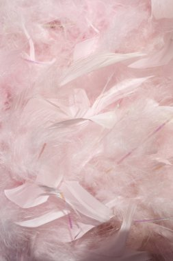 Fluffy pink feathers