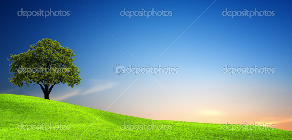 Фотообои Tree in green field