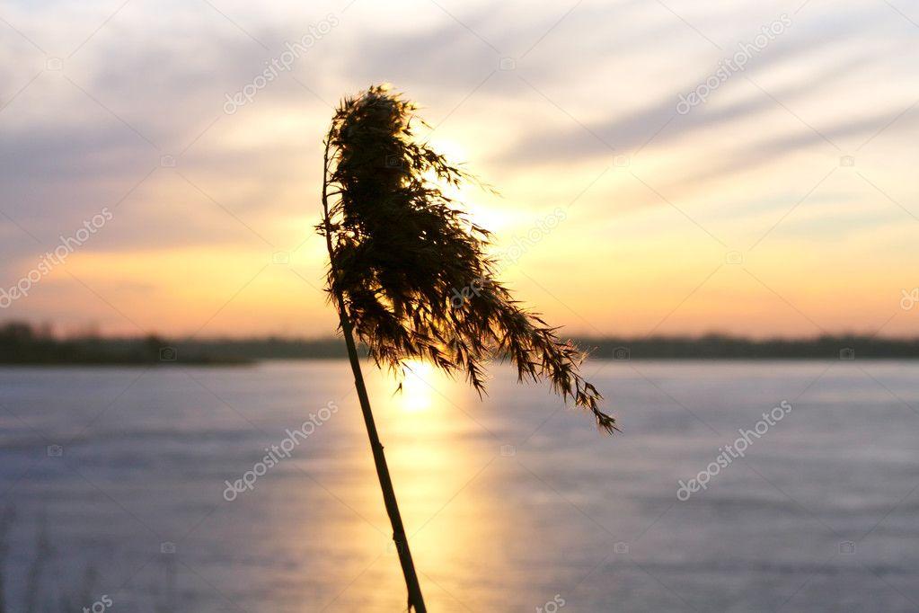 Sunny Stream