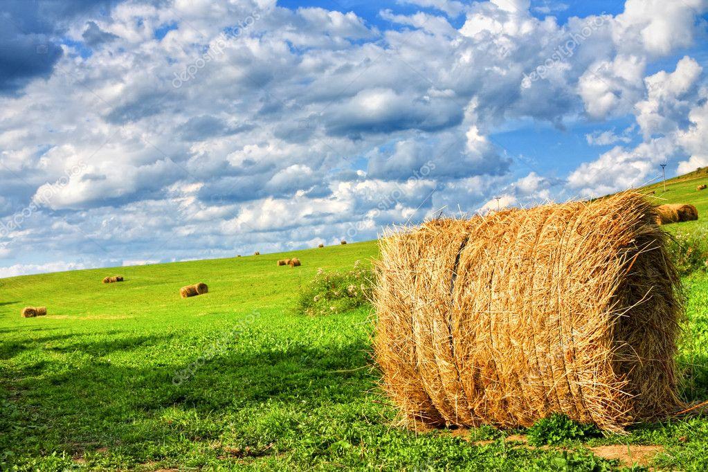 Field of hay bales