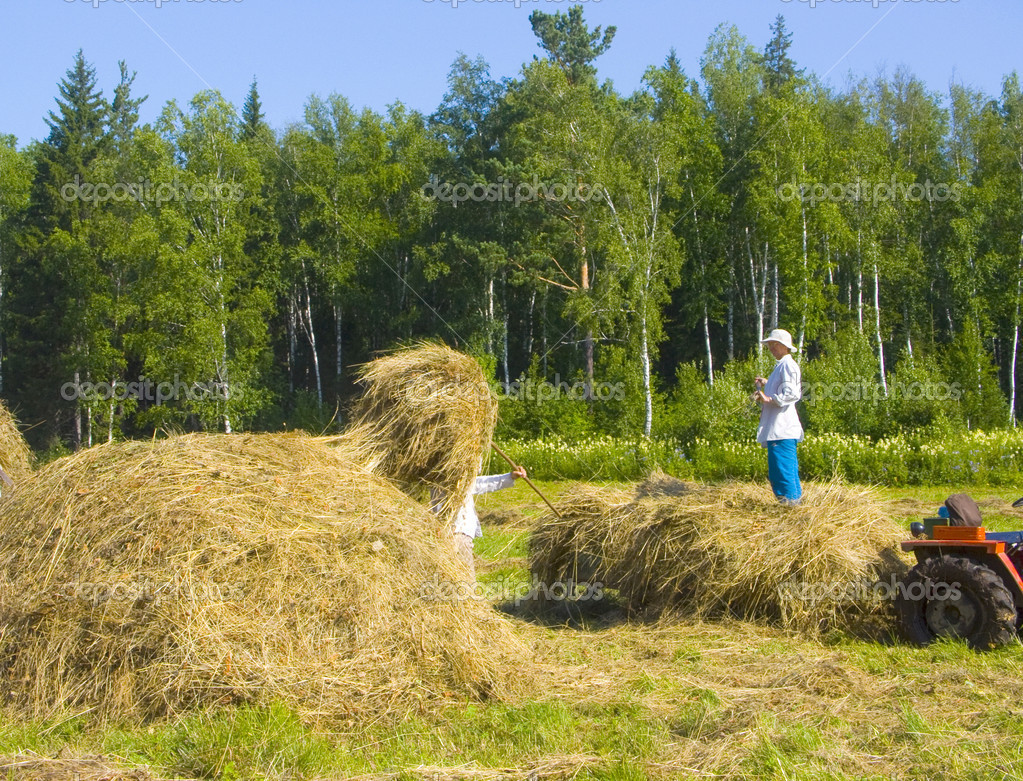 Haymaking in Siberia 19