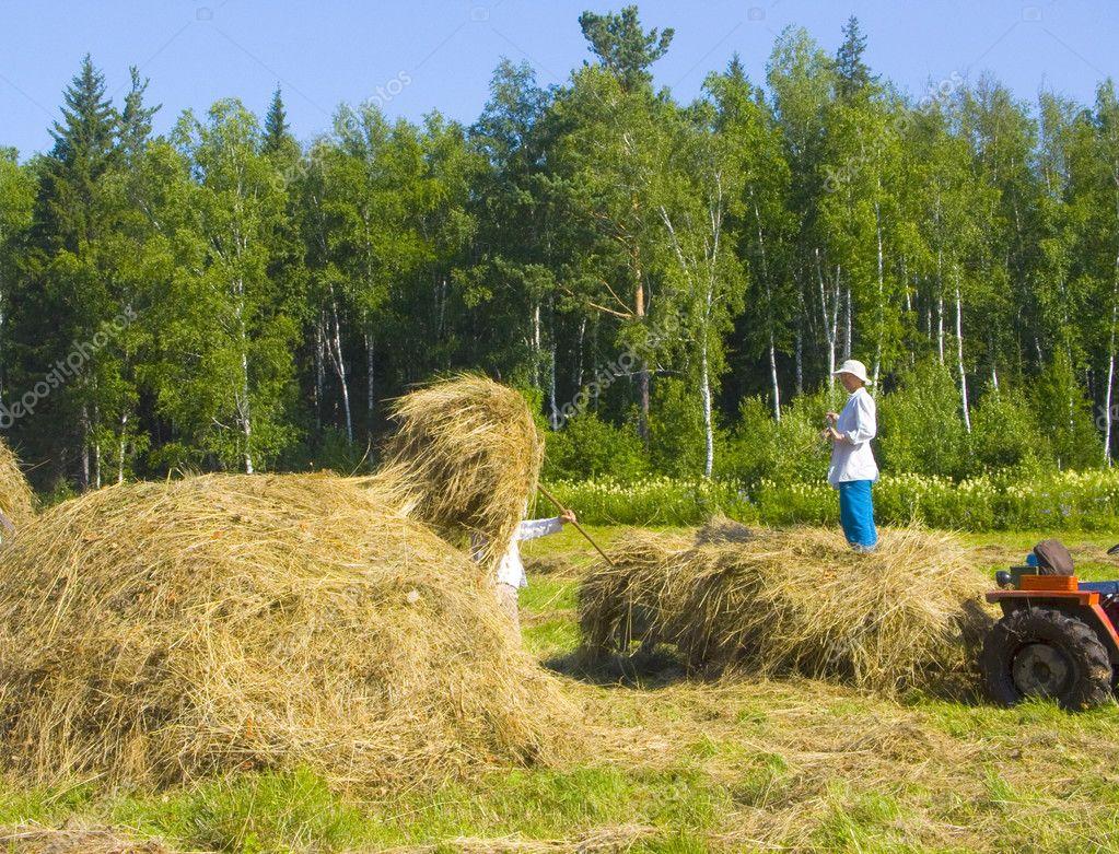 Haymaking in Siberia 19