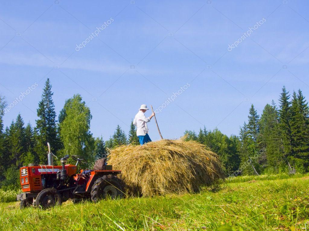 Haymaking in Siberia 16