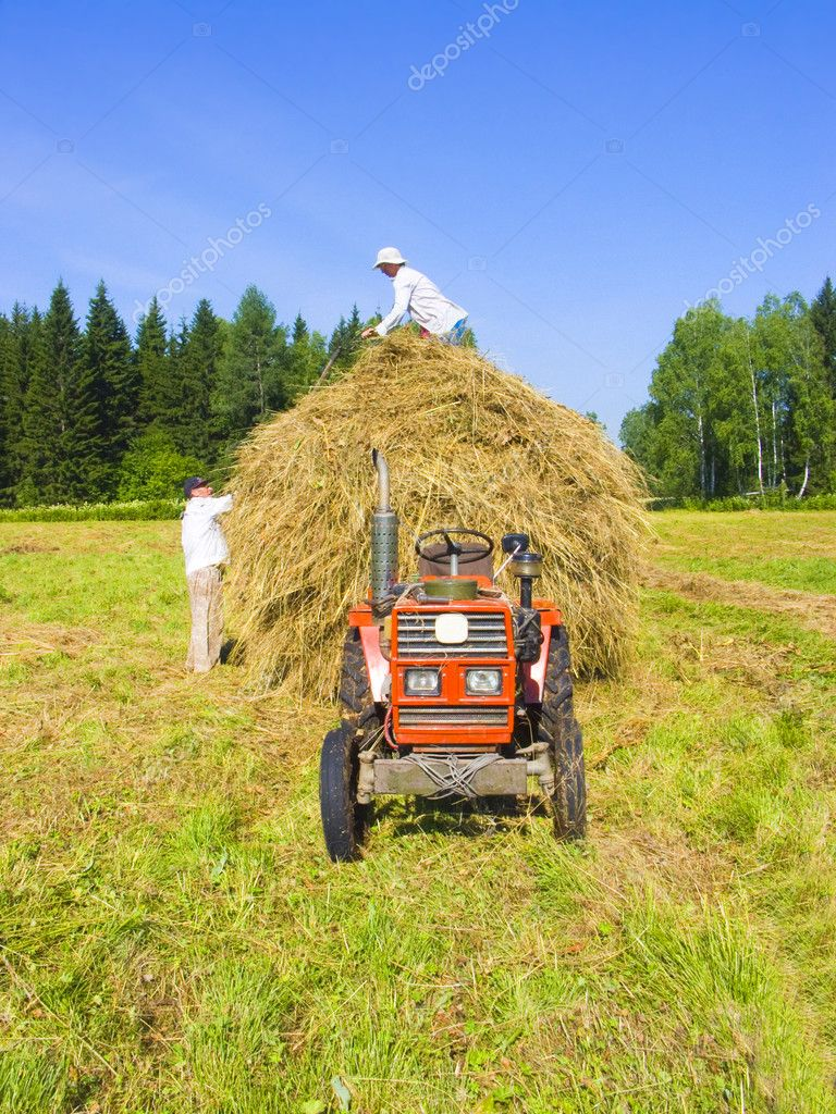Haymaking in Siberia 10