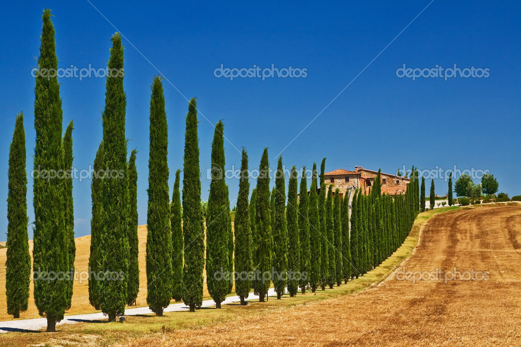 Tuscany farm view