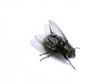 A macro fly stock vector