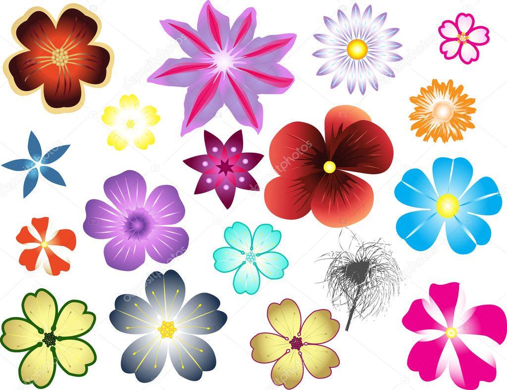 Different types of flowers — Stock Vector © jelen80