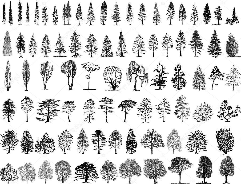 Фотообои Tree silhouettes