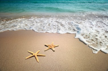 Two starfish on a beach stock vector