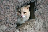 Fotografie kočka