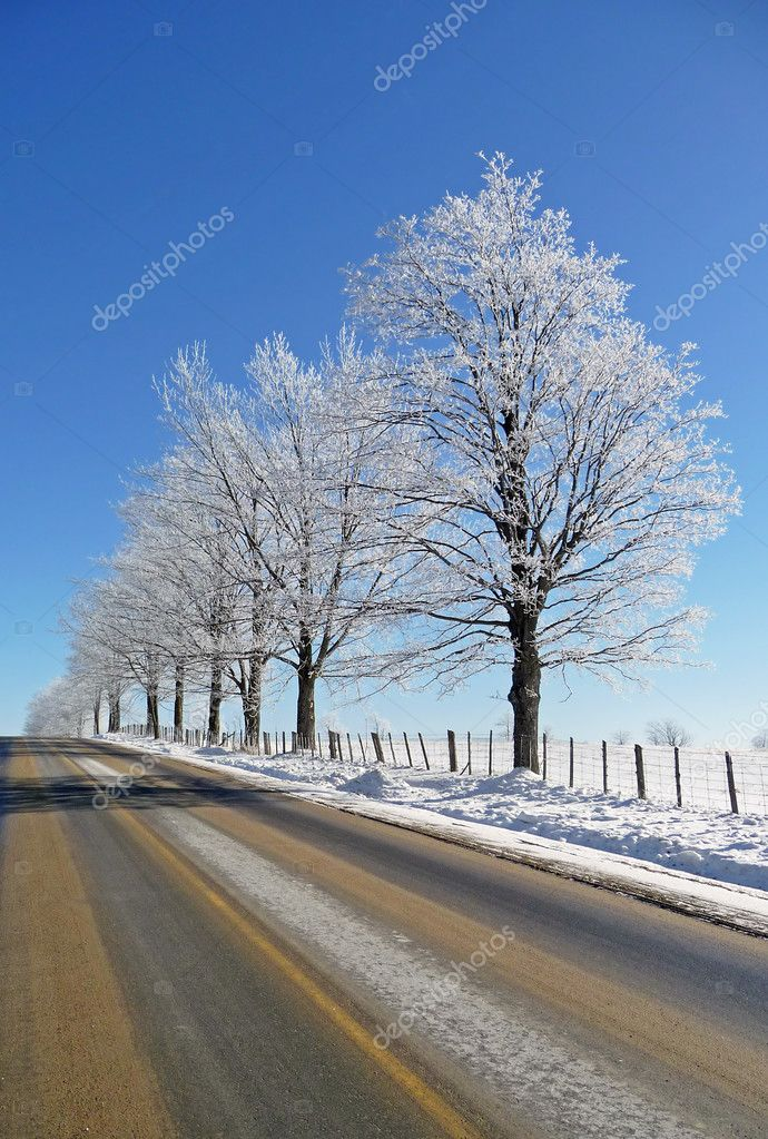 Hoar frost covered trees and rural road