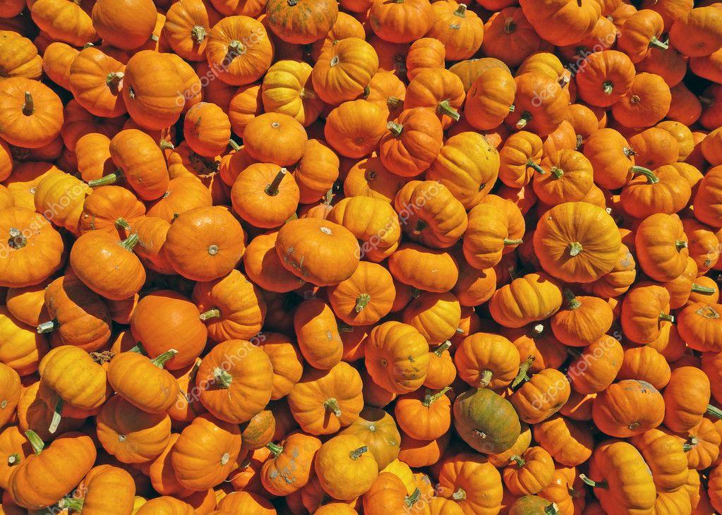 Many mini pumpkins background