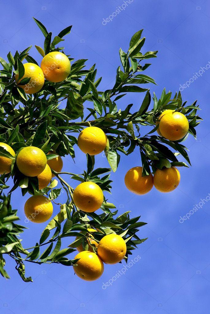 Oranges in blue sky.