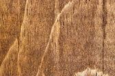 dřevo zrno 1