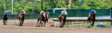 Horse Race Panorama