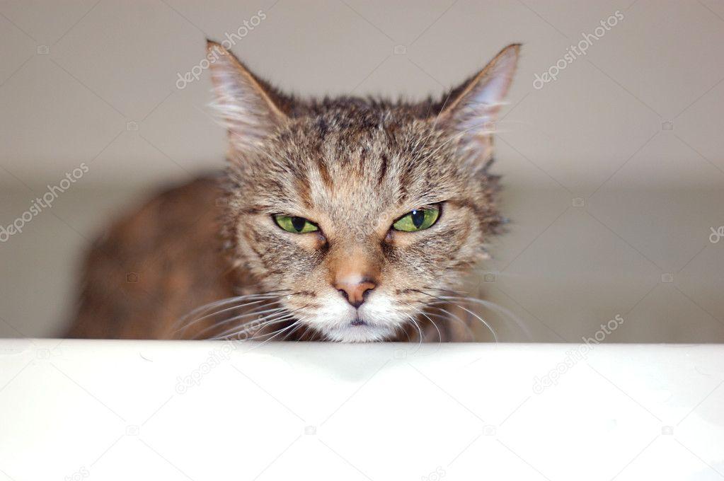 humide gouttes de chatte pics