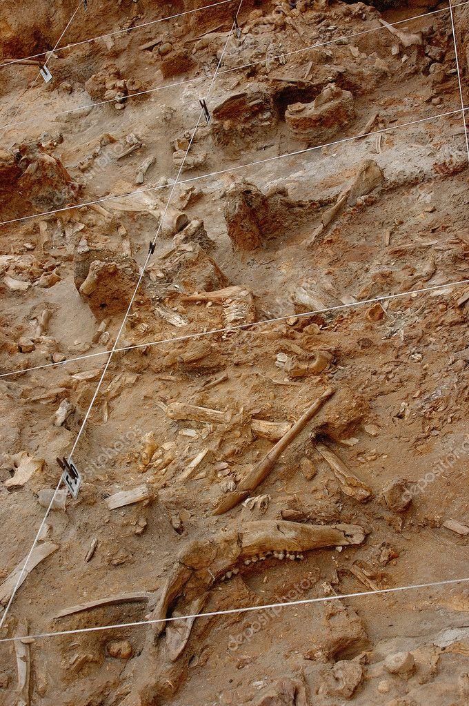 Fossil bone dig
