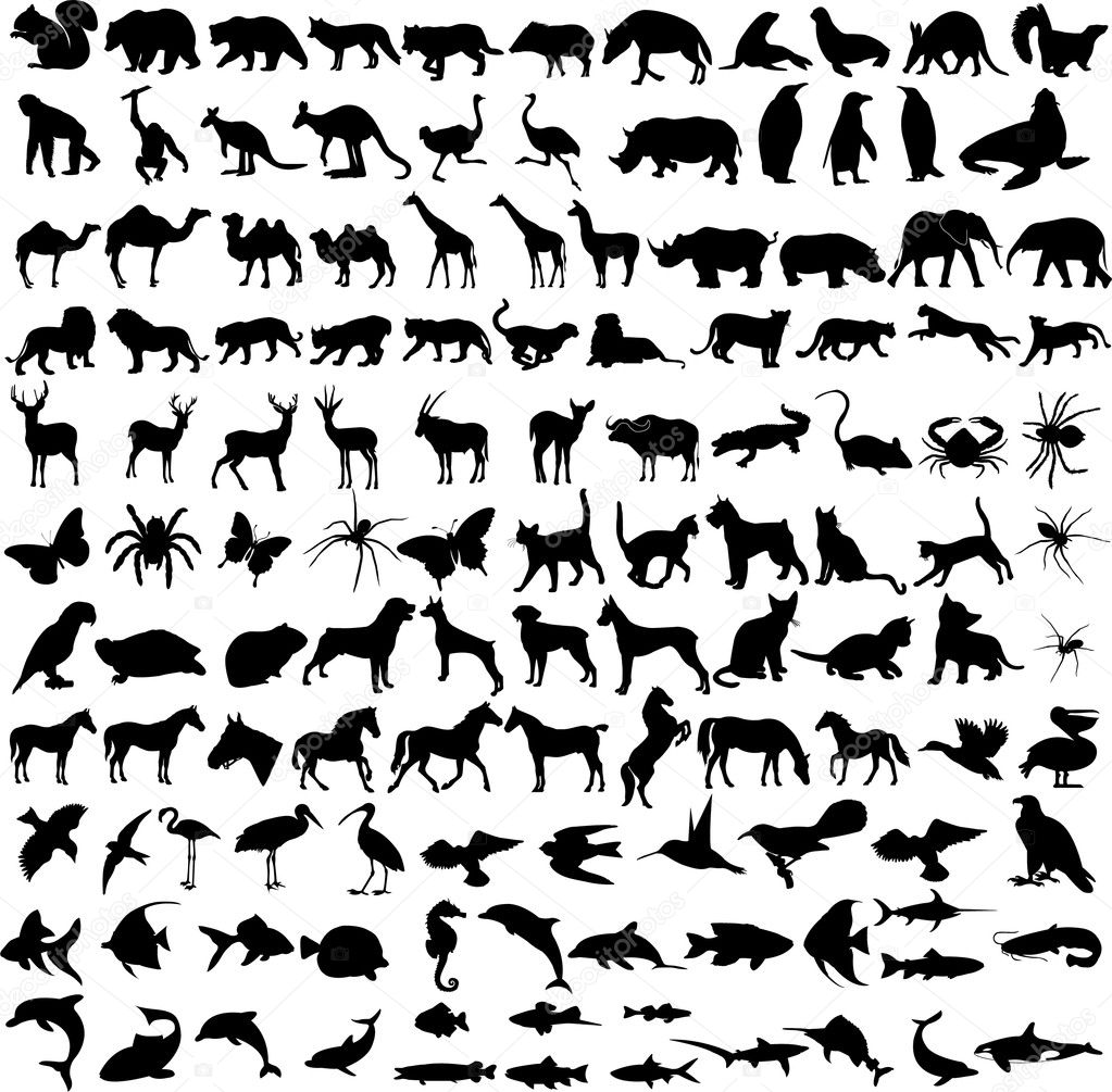 Animals silhouettes