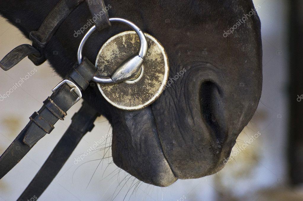 Horse bit — Stock Photo © lebanmax #1972647