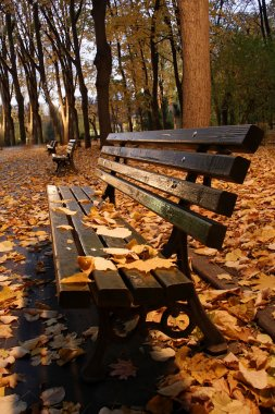 Green bench in a park in autumn.