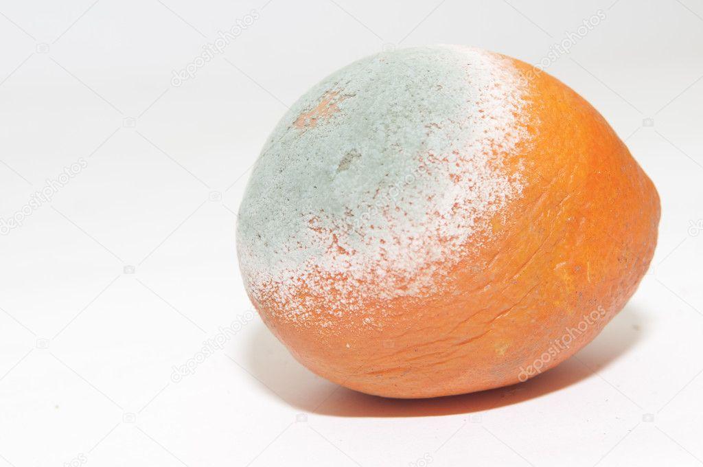 depositphotos_2249249-stock-photo-rotten-orange.jpg