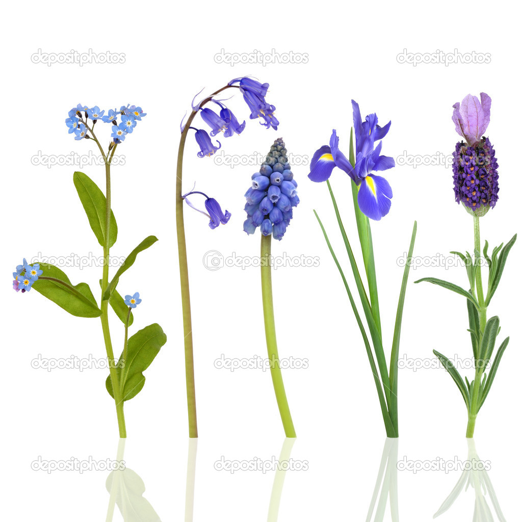 Spring flowers in blue stock photo marilyna 1987419 spring flowers in blue stock photo 1987419 dhlflorist Choice Image
